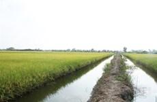 High-tech shrimp farming brings high profits in Bac Lieu province