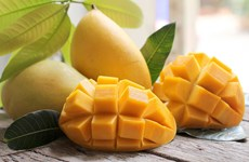 Ministry targets 650 million USD from mango exports by 2030