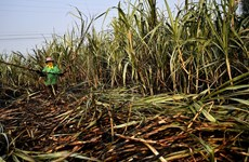 Thailand approves 192-mln-USD subsidy to reduce burning of sugarcane fields
