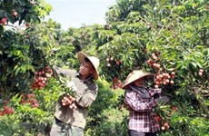 Conference to seek ways for boosting farm produce export to Japan