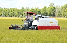 Vietnamese rice accounts for 84 percent of Philippines' rice imports