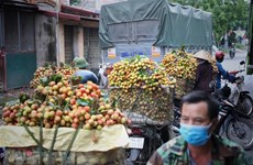 Bac Giang's lychees to be sold on e-commerce platforms