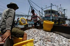 Thai government promotes sustainable fishing
