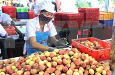 Hai Duong exports lychee to Thailand for first time