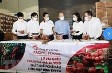 Vietnamese lychees head for EU markets
