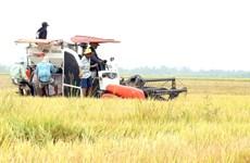 Kien Giang does not let COVID affect socio–economic development