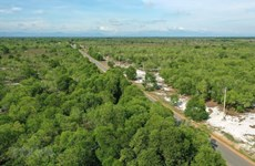 Ben Tre province to plant 10 million trees in five years