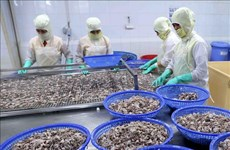 Squid, octopus exports to China remain on the rise