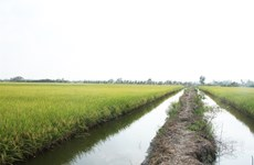 Bac Lieu to expand large-scale agricultural production