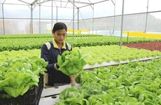 Nearly 36 percent of public investment for agriculture disbursed in six months