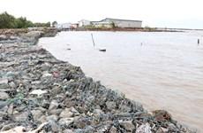 Ca Mau to invest 38.7 million USD to build coastal embankment