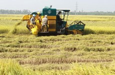 An Giang advised to speed up digital transformation in agriculture