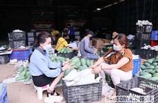 Vietnam's green mangos promoted in Australia