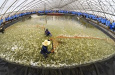 Vietnam, Australia look to beef up agriculture cooperation