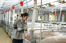 IFC helps GreenFeed Vietnam expand pork production