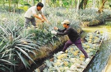 Kien Giang invests efforts in conserving rare genetic resources