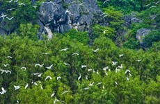 Vietnam promotes cooperation on nature preservation with WWF