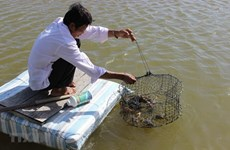 Ca Mau province acts to better protect environment in aquaculture