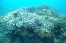 Local community takes lead in protecting Binh Dinh's coral reefs