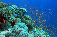 Efforts to revive and protect coral reef ecosystems in Ha Long Bay