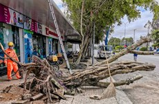 Strong winds, rains kill two in Mekong Delta, destroy houses, trees