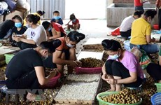Policy dialogue promotes ASEAN women's role in agriculture