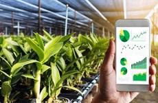 Vinh Phuc prioritises digital transformation in agriculture