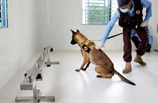 Cambodia succeeds in training dogs to detect COVID-19 patients