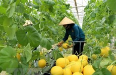 Nine global agritech entrepreneurs supported to scale solutions in Vietnam