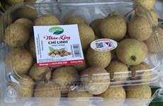 Hai Duong begins harvesting longan for export