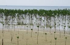 ASEAN launches region-wide greening initiative