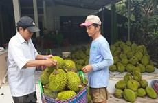 Vietnam's Ri6 durian sells well in Australia