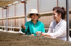 King Coffee announces project connecting farm produce suppliers