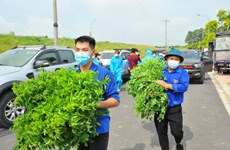 Hanoi's youths join hands to fight pandemic