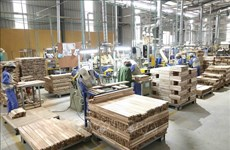 India decides not to impose anti-dumping duty on MDF boards from Vietnam