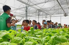 Agritourism expected to bring double benefits to Hanoi