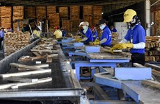 COVID-19 production suspension hampering timber exports