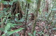 Binh Phuoc releases rare animals back into the wild