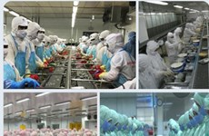 Soc Trang's export up 19 percent in eight months