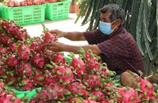 Project looks to bolster Vietnam's dragon fruit exports to Europe