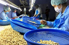 Vietnamese cashew nuts increase market's share in Russia