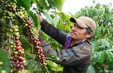 Vietnam, Australia cooperate in organic food trade