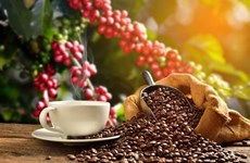 Coffee tourism offers chance for Vietnam's agro-tourism: webinar