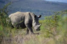 Public awareness about rhino conservation should be strengthened