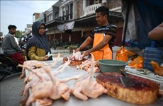 COVID-19 prompts urgency to cope with food waste crisis: Experts