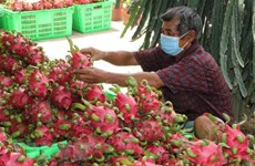 Potential grows for vegetable and fruit exports to US