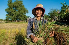 Cambodia's agricultural product exports surge 46.47 percent in nine months
