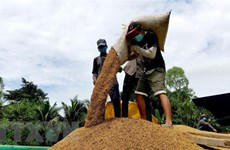 Vietnamese rice price increases in domestic, foreign markets