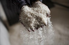 Laos exports rice to EU for first time