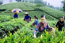 Coordination enhanced to improve livelihoods for ethnic minorities
